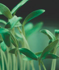 Planta y Plantel Ecológico